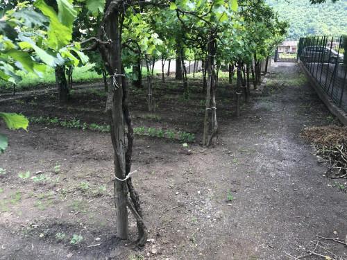 Vai alla scheda: Terreno Agricolo Vendita Montoro Superiore