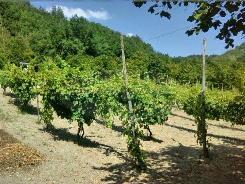 Terreno Agricolo in vendita a Manocalzati, 9999 locali, prezzo € 20.000 | Cambio Casa.it