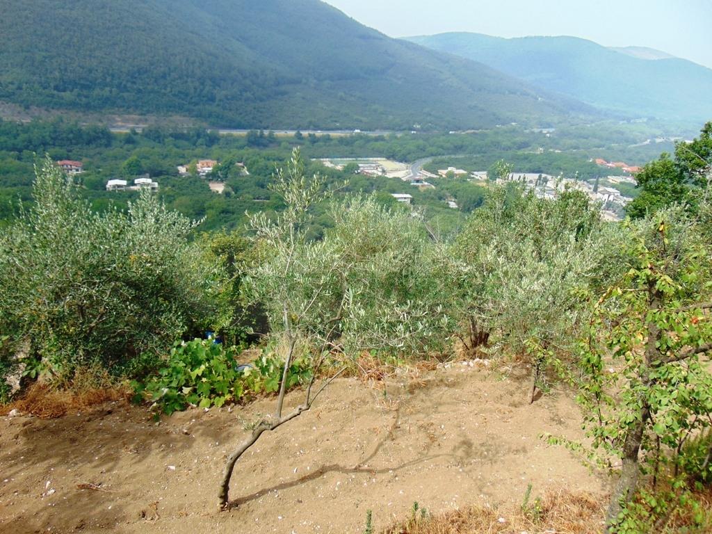 Terreno Agricolo in vendita a Mugnano del Cardinale, 9999 locali, prezzo € 50.000 | CambioCasa.it