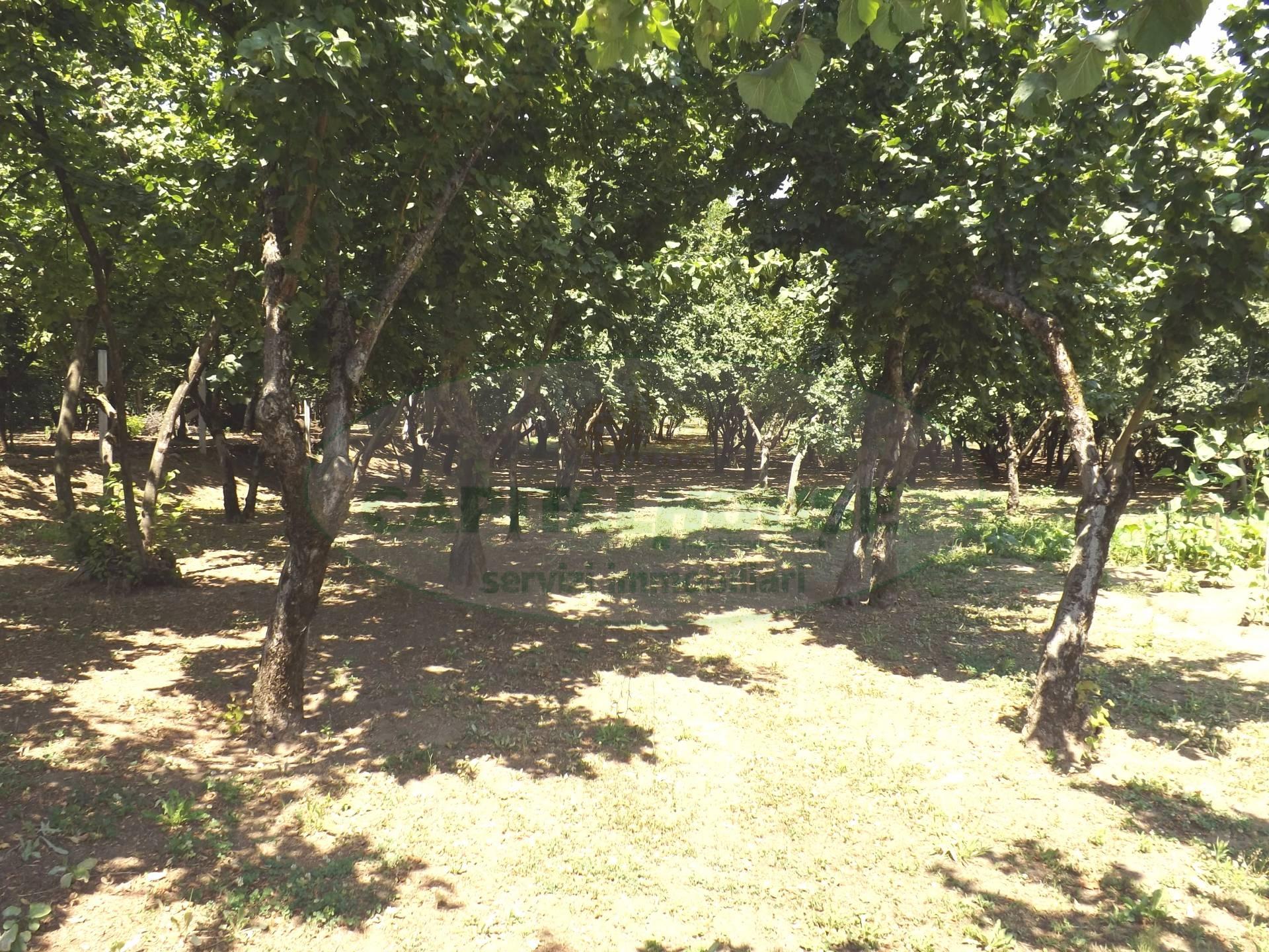 Terreno Agricolo in vendita a Cesinali, 9999 locali, prezzo € 30.000 | Cambio Casa.it