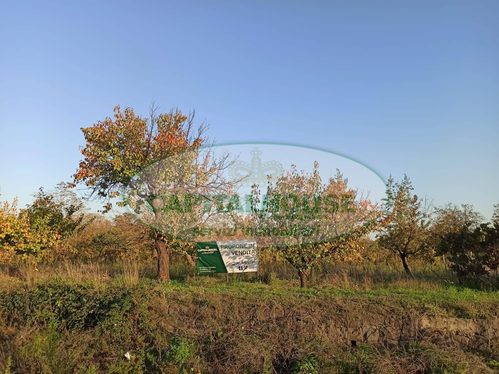 Terreno Agricolo in vendita a Ottaviano, 9999 locali, prezzo € 8.000 | CambioCasa.it
