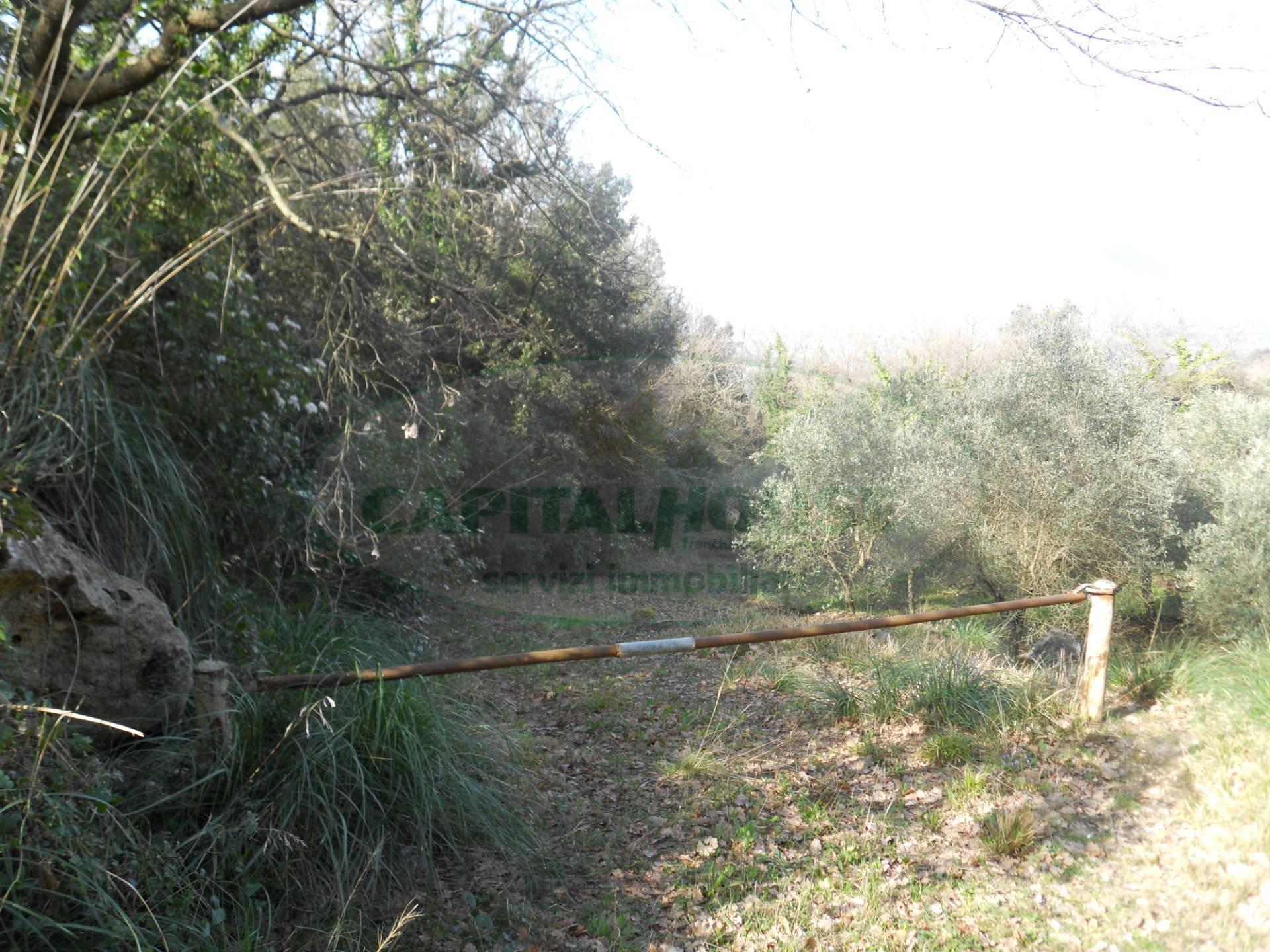 Terreno agricolo in vendita a Giano Vetusto (CE)