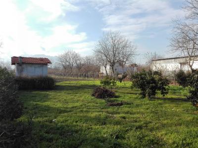 Vai alla scheda: Terreno Agricolo Vendita - San Gennaro Vesuviano (NA) - Rif. 7944