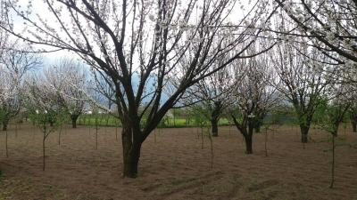 Vai alla scheda: Terreno Agricolo Vendita - Montoro (AV) | Preturo - Rif. 8290