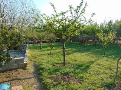 Vai alla scheda: Terreno Agricolo Vendita - Avella (AV) - Rif. 8419