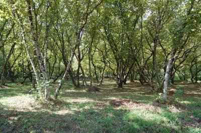Vai alla scheda: Terreno Agricolo Vendita - Monteforte Irpino (AV)   Breccelle - Rif. 2410