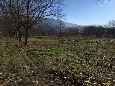 Vai alla scheda: Terreno Agricolo Vendita - Montoro (AV) | Figlioli - Rif. 8337