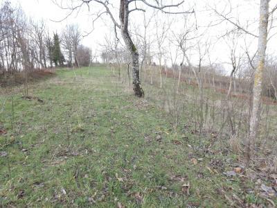 Vai alla scheda: Terreno Agricolo Vendita - Atripalda (AV) - Rif. 8280