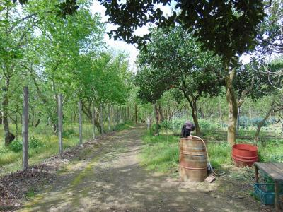Vai alla scheda: Terreno Agricolo Vendita - Baiano (AV) - Rif. 8594