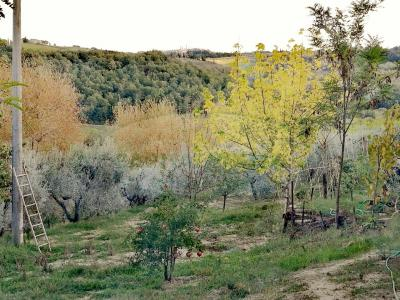 Vai alla scheda: Appartamento Vendita - San Gimignano (SI) - Rif. 8643