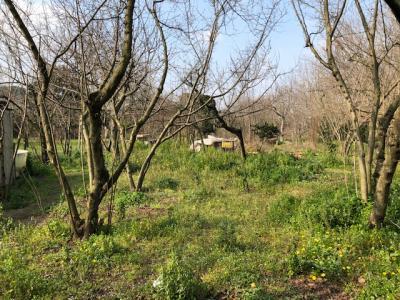 Vai alla scheda: Terreno Agricolo Vendita - Marigliano (NA) | Miuli - Rif. 8143