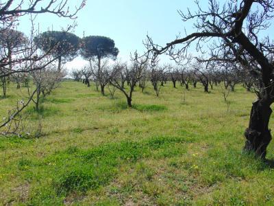 Vai alla scheda: Terreno Agricolo Vendita - Capua (CE) | Sant'Angelo in Formis - Rif. 50TERR