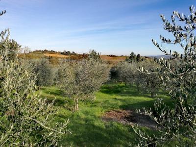 Vai alla scheda: Villa singola Vendita - Gambassi Terme (FI) - Rif. 8698