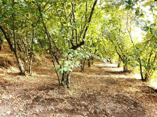 Vai alla scheda: Terreno Agricolo Vendita - Aiello del Sabato (AV) - Rif. 8573