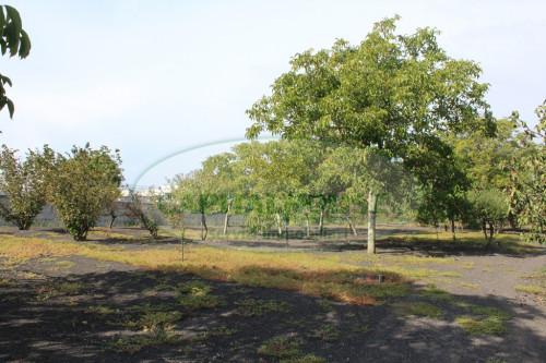 Vai alla scheda: Terreno Agricolo Vendita - Saviano (NA) - Rif. 489952