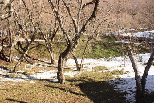 Vai alla scheda: Terreno Agricolo Vendita - Monteforte Irpino (AV) | Campi - Rif. 11117
