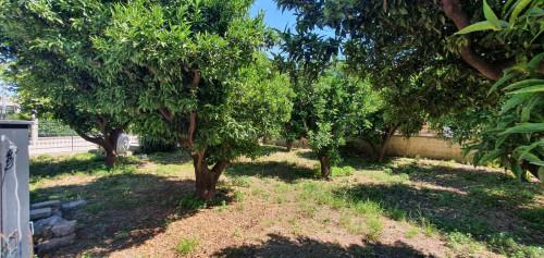 Vai alla scheda: Terreno Agricolo Vendita - Caserta (CE) | Centro - Rif. 30T