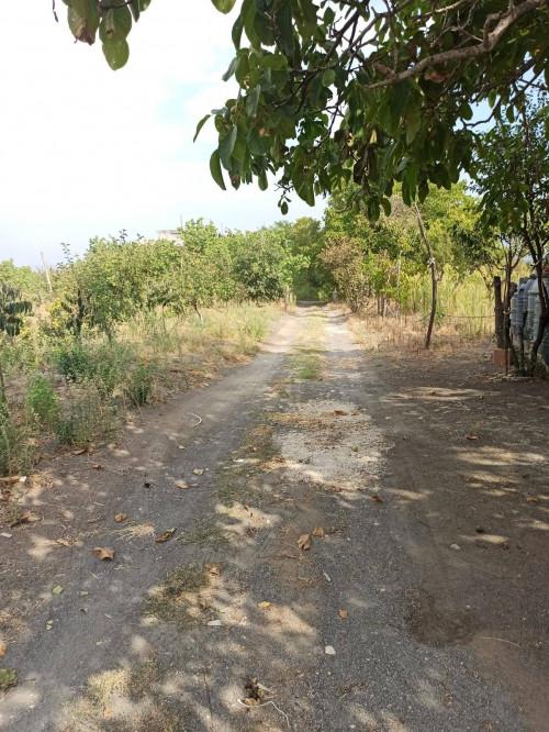 Vai alla scheda: Terreno Agricolo Vendita - Somma Vesuviana (NA) - Rif. 458896