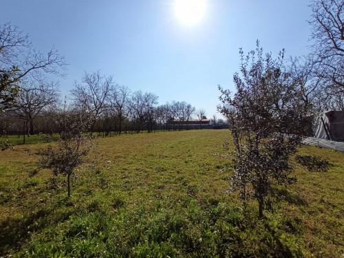 Vai alla scheda: Terreno Agricolo Vendita - San Gennaro Vesuviano (NA) - Rif. 458965