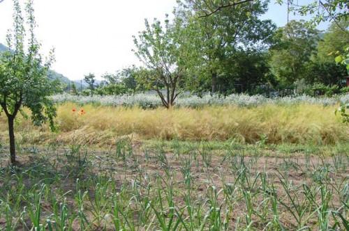 Vai alla scheda: Terreno Agricolo Vendita - Monteforte Irpino (AV) | Campi - Rif. 11214