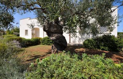 Vai alla scheda: Villa singola Vendita San Vito dei Normanni