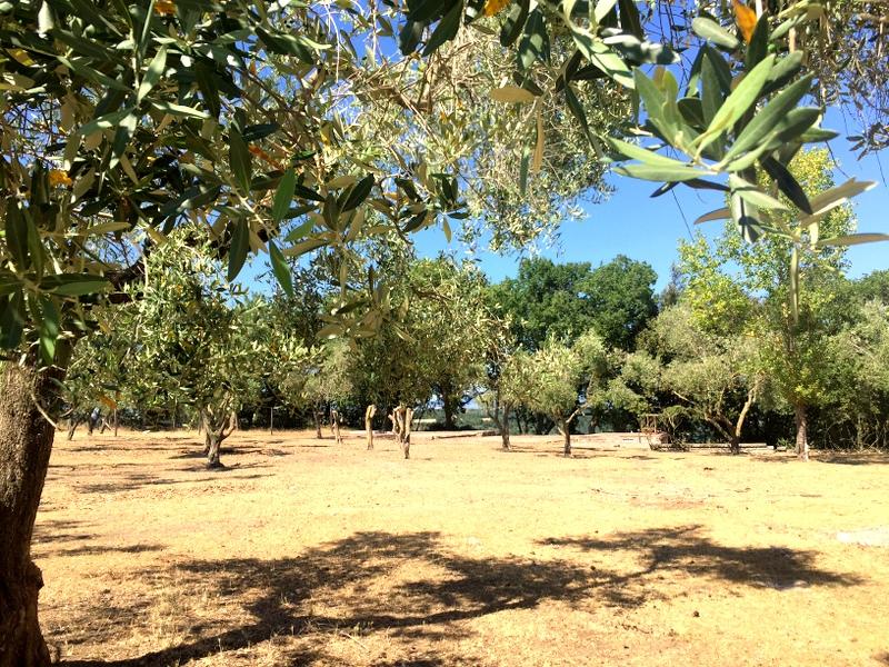 Terreno Agricolo in vendita a Vitorchiano, 9999 locali, zona Località: Vitorchiano, prezzo € 80.000   Cambio Casa.it