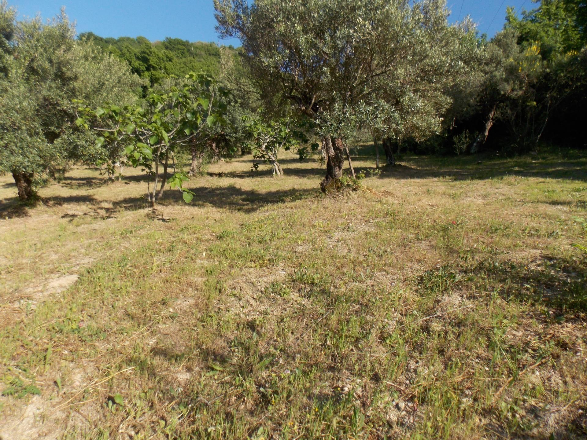 Terreno Agricolo in vendita a Torchiara, 9999 locali, prezzo € 75.000   CambioCasa.it