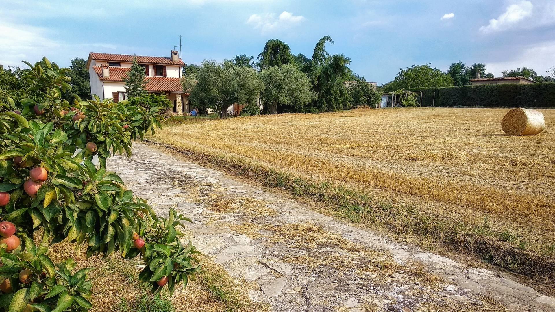 Rustico / Casale in vendita a Tuscania, 5 locali, zona Località: paese, prezzo € 279.000   CambioCasa.it
