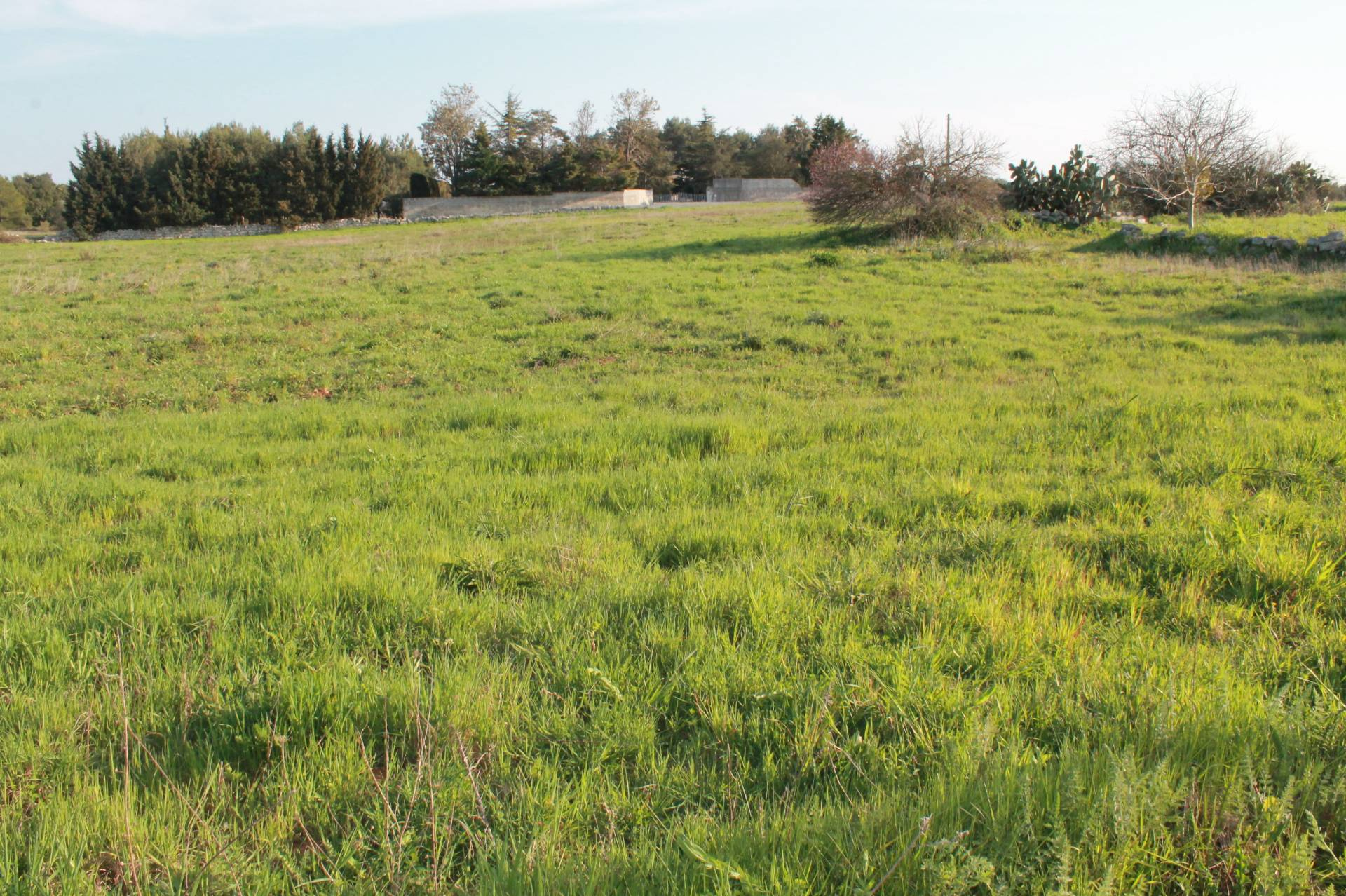Terreno Agricolo in vendita a Poggiardo, 9999 locali, prezzo € 53.000 | CambioCasa.it
