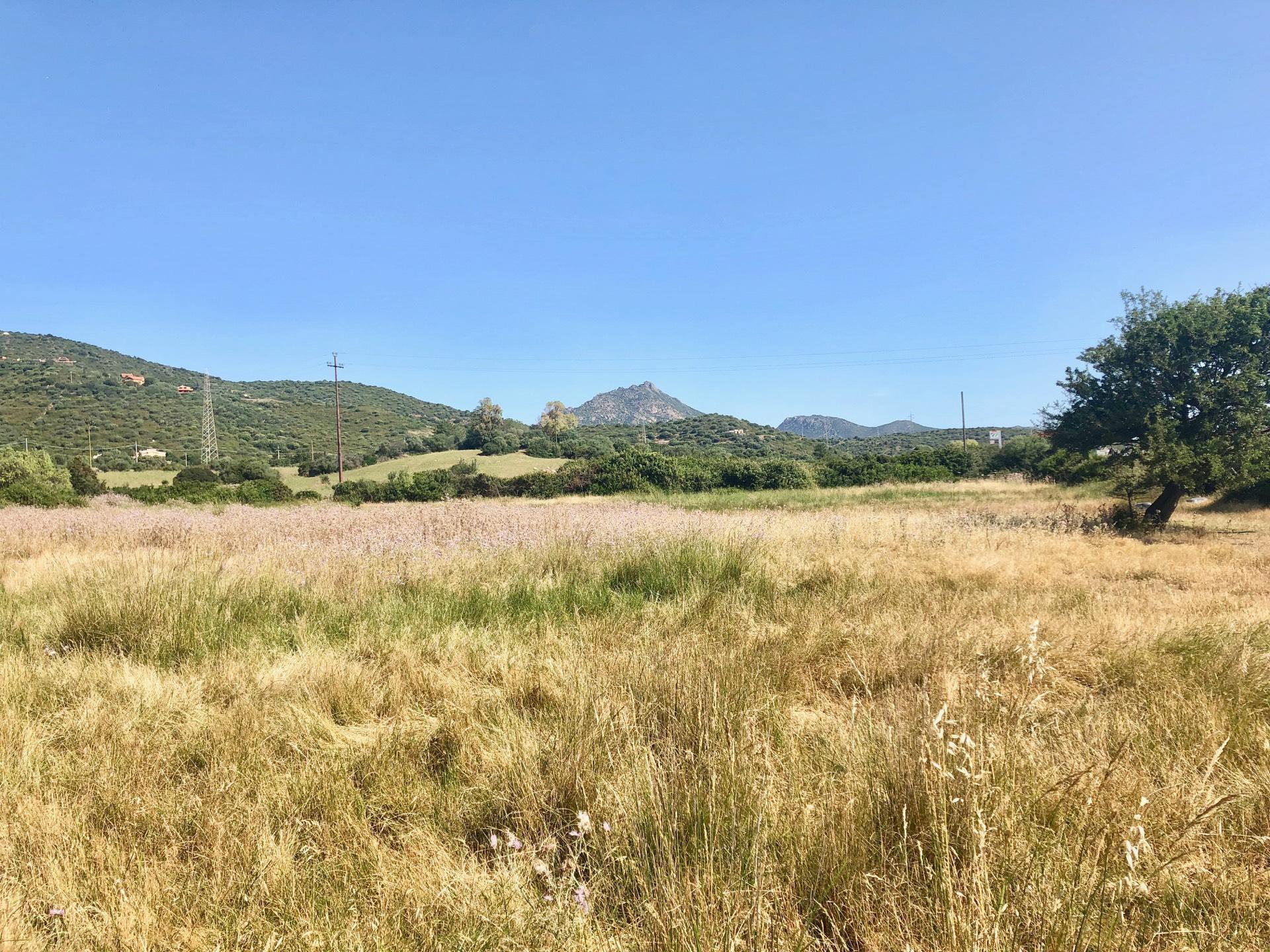 Terreno Agricolo in vendita a , 9999 locali, zona Località: PortoRotondo, prezzo € 130.000 | PortaleAgenzieImmobiliari.it
