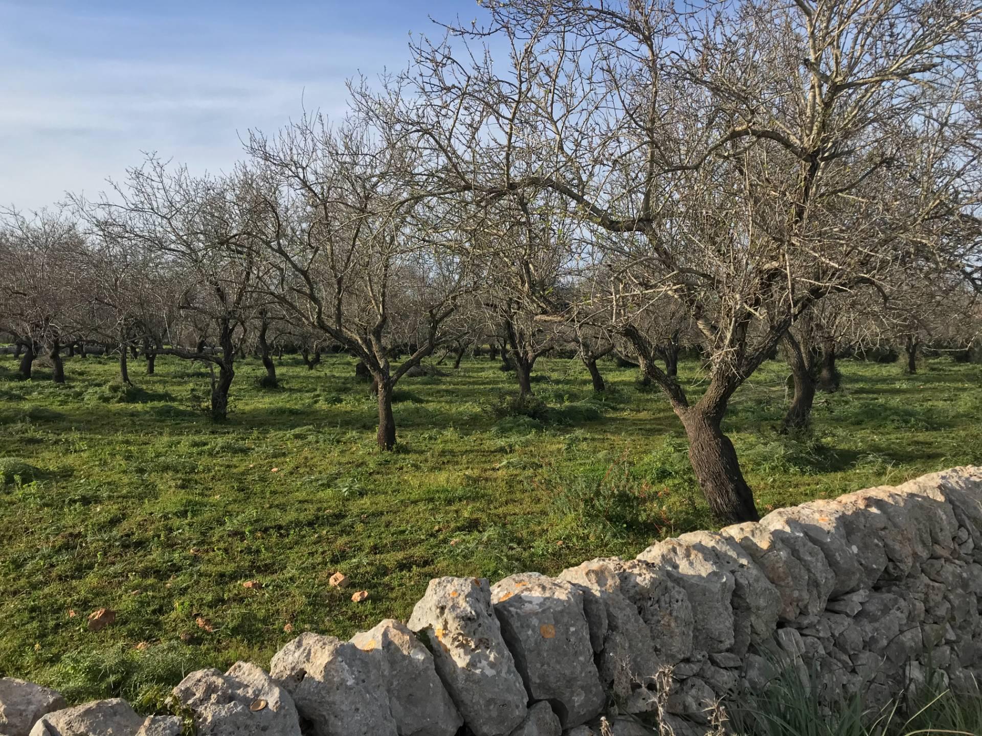 Terreno Agricolo in vendita a Noto, 9999 locali, prezzo € 27.000   CambioCasa.it