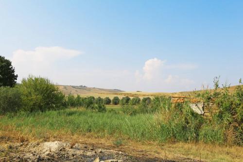 Terreno in Vendita a Tarquinia