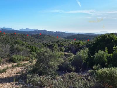 Terreno agricolo in Vendita a Berchidda