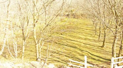 Terreno Agricolo in Vendita a Finale Ligure