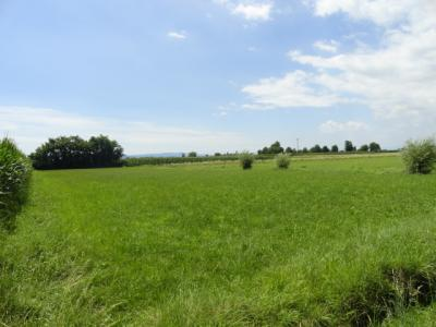 Terreno Agricolo in Vendita a Mazzè