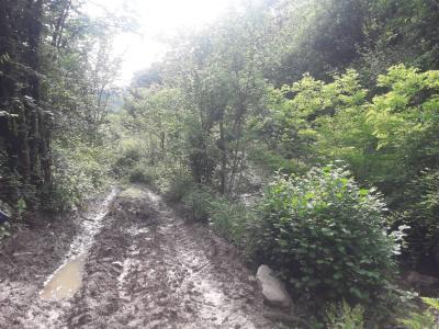 Terreno Agricolo in Vendita a Rivalba